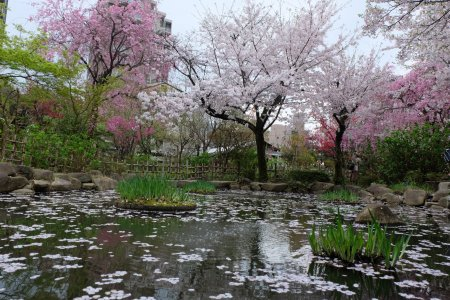 สวนชูเคเอนในฤดูใบไม้ผลิ