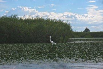 <p>นกกระสาขาวหาปลาในน้ำตื้น</p>