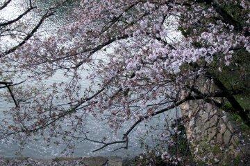 Спокойный вечер в Хиросиме