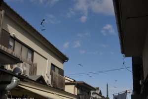 Tombi or black kites hover over the shops