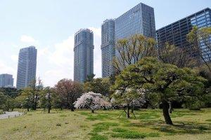 ภาพอันงดงามของสวนสวยกับตึกระฟ้าอันทันสมัย 'กลุ่มตึกระฟ้าชิโอะโดะเมะ'