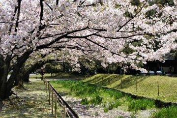 ฮานามิที่สวนฮะมะริคิว