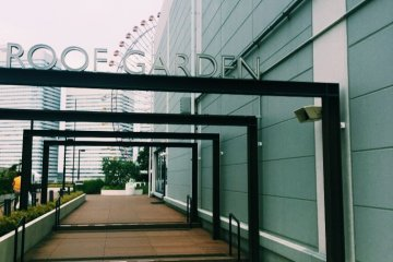 View walking into the roof garden