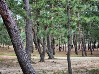 The grounds also include masses of pine trees, which release an intoxicating scent in summer