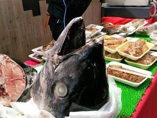 หัวปลาทูน่าที่ดูแค่หัว ก็สามารถจินตนาการได้ว่าตัวจะมีขนาดใหญ่เพียงใด