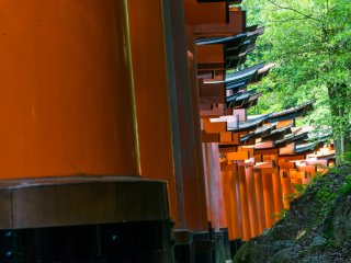 The famed path of red torii gates at Fushimi Inari-taisha, Kyoto.