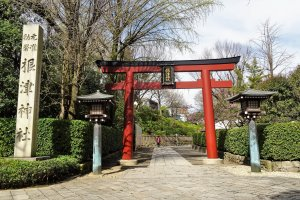 ประตูโทริสีแดงของศาลเจ้าเนะซุ (Nezu)