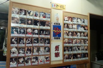 Pets who have stayed here