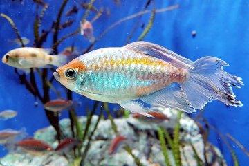 สบตาปลาตัวน้อยที่ Sunshine Aquarium