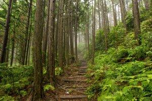 The Nakahechi route to Kumano Hongu Taisha will take you through atmospheric forest, often shrouded in mist.