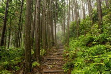 The Nakahechi route to Kumano Hongu Taisha will take you through atmospheric forest, often shrouded in mist.