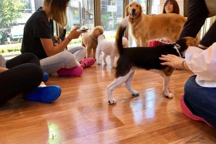 Dog Heart Cafe ở Aquamarine