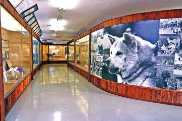 Inside Akita Inu Museum