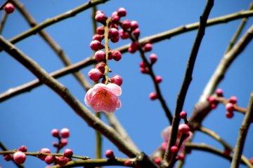 수백 그루의 나무들이 완벽한 꽃을 잡을 수 있는 좋은 기회를 제공한다