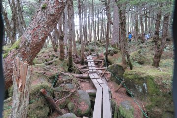 Plank Trail Around Shirakoma Pond