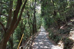 เส้นทางที่ปูด้วยหินคดโค้งขึ้นเขาไปสู่วัดยะคุโอะอินนั้นสวยงามมาก มีต้นซุกิ (sugi) หรือสนญี่ปุ่นต้นใหญ่ๆ และเมเปิ้ลญี่ปุ่นยืนเรียงรายให้ร่มเงาตลอดเส้นทาง
