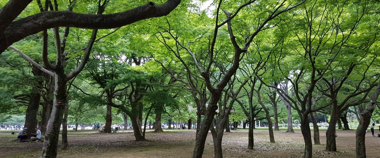 สวนป่าในสวนโยะโยะกิ (Yoyogi)