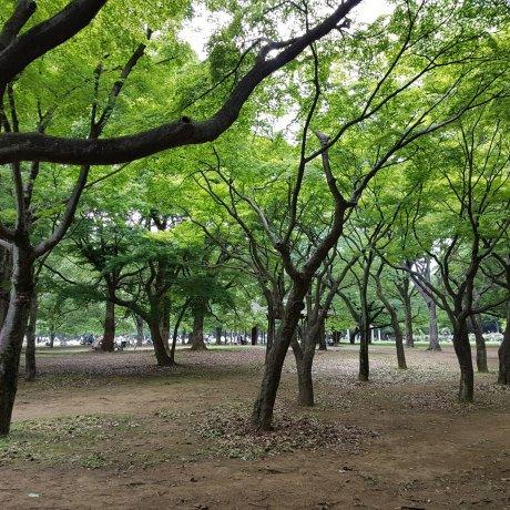 สวนโยะโยะกิ โตเกียว
