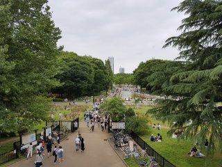 สวนโยะโยะกิ เปรียบดังสวนลุมพินีของญี่ปุ่น