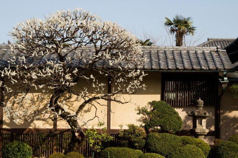 Храм Готокудзи, Сэтагая