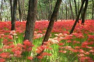 สวรรค์สีแดง