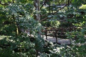 吊り橋のそばまで木の枝が伸びている