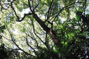 Огромные деревья на территории храма