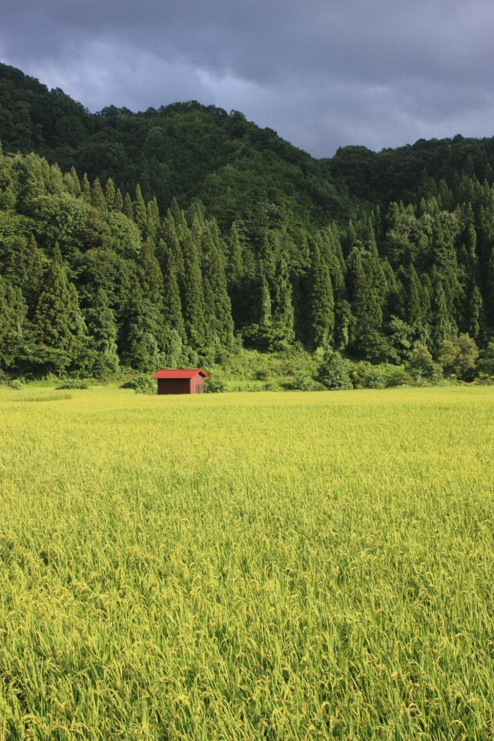 Summer: Dramatic colours before a sudden storm. Kaneyama is famed for its Japanese cedar trees, and thick forests cover the surrounding hills. Many houses in the town are built using cedar, with black wooden frames and white walls.