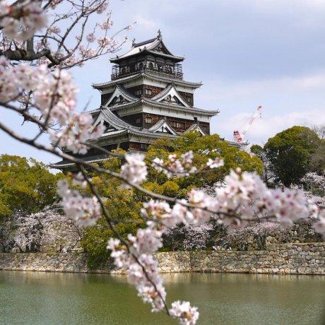 Sakura Beauty in Hiroshima