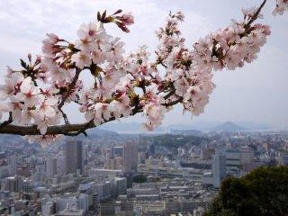 Il y a des points de vue exceptionnels depuis la pagode de la paix sur la ville et sur les îles de la mer intérieure de Seto