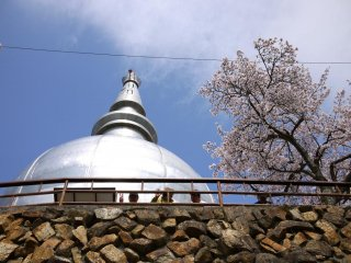 Des gens profitent de la vue et de leur déjeuner sous les cerisiers en face de la pagode de la paix