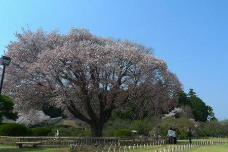 Vườn Kairakuen vào mùa xuân