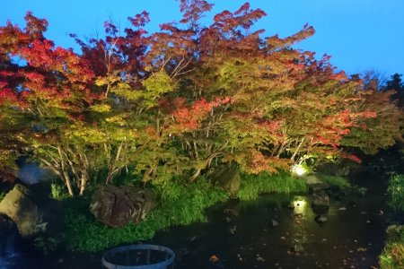 Nabana no Sato Winter Illuminations