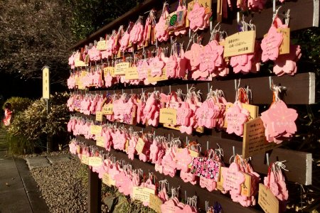 Сакураги - храм цветущей сакуры