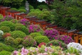 งานเทศกาลดอกอะเซลเลียแห่งบุงเกียว