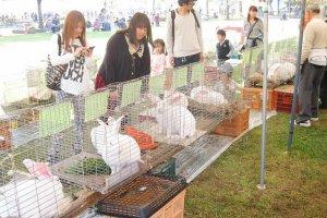 เทศกาล All Japan Giant Rabbit