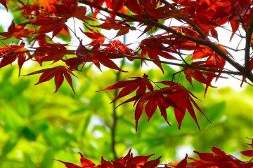 신선한 녹색과 매력적인 빨간색