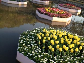 Những luống hoa nổi trên mặt nước