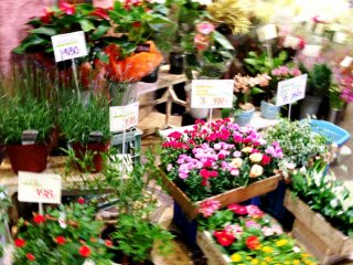 A rainbow of pastel colors at the Nishiki Flower Markets in Central Kyoto