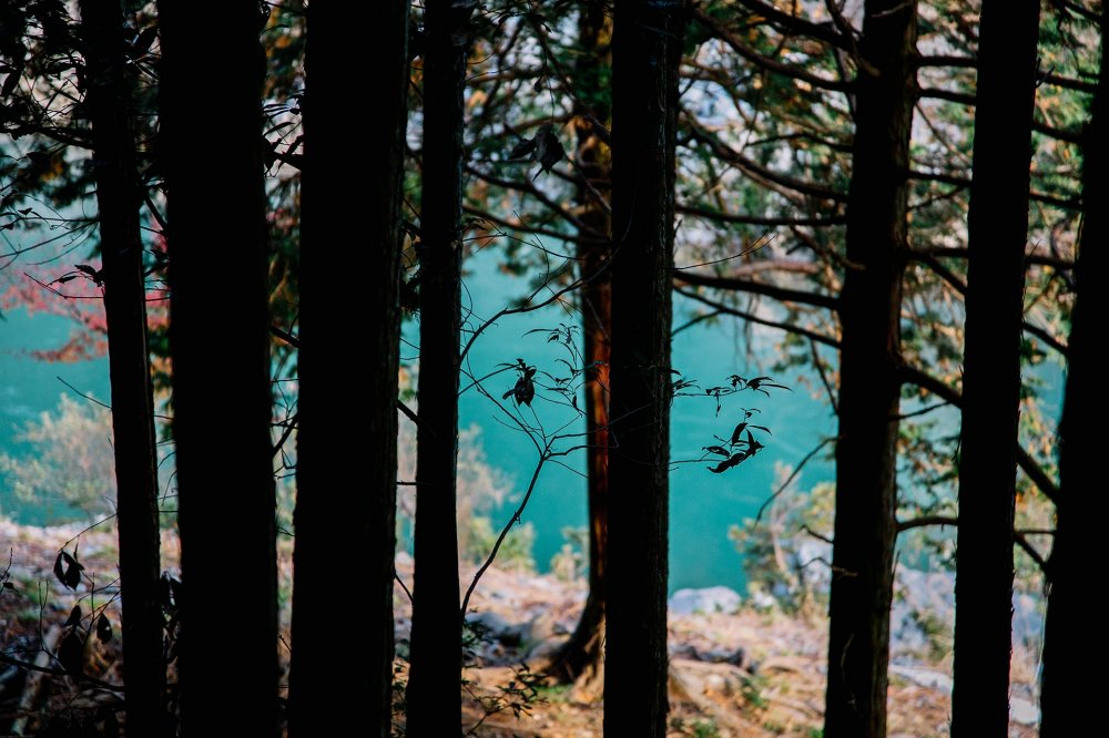 Turquoise between the trees
