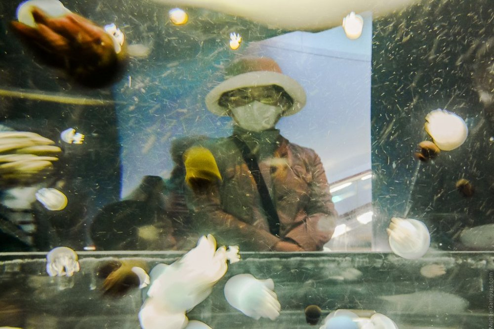 A woman wearing a mask on the other side of a jellyfish tank in Osaka Aquarium Kaiyukan.