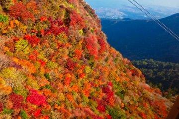 Осенние цвета у канатной дороги