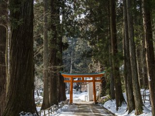 Walk past the torii gate and farther into Chuson-ji's grounds, where fewer people venture, to find more photo opportunities