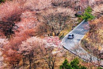 Сакура на горе Йосино
