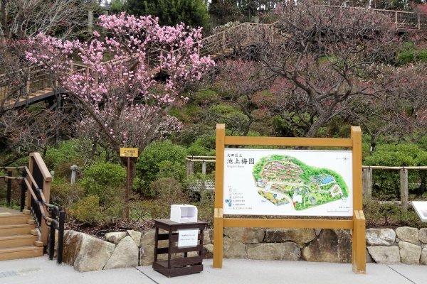 สวนพลัมอิเคะกะมิ ไบเอ็น (Ikegami Baien) เป็นสวนที่มีต้นพลัมญี่ปุ่นประมาณ 470 ต้น