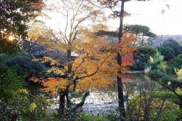 Tennoji Park in Autumn