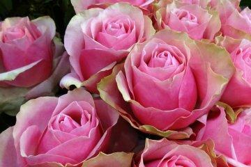 ชมดอกไม้ที่ตลาดโอตะ