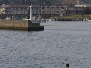 港近くで釣りをする男性