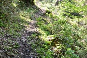 登山道は広くは無いが、それほど危険な個所はほとんどない