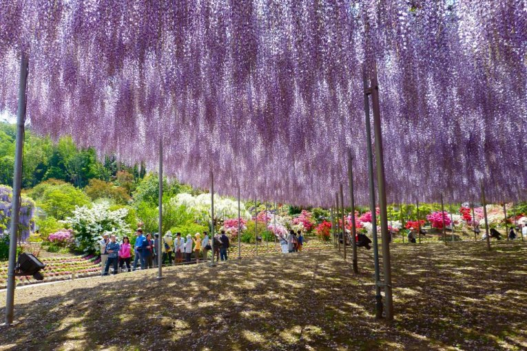 Parque Ashikaga en mayo - parte 1